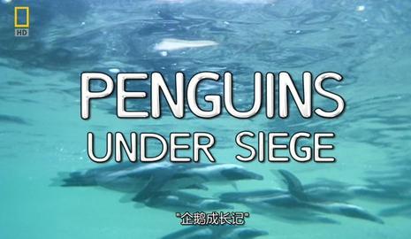 国家地理:企鹅成长记