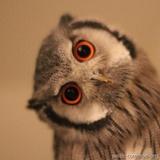 ∑'owl