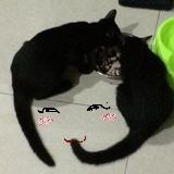 诚猫组务号