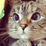 Meow酱
