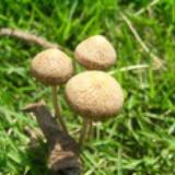 哈维家的小蘑菇