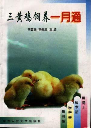 三黄鸡饲养一月通