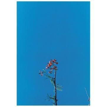 Joanna Newsom & the Ys Street Band EP