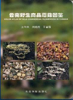云南野生商品蘑菇图鉴