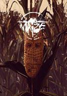 Maize 玉米