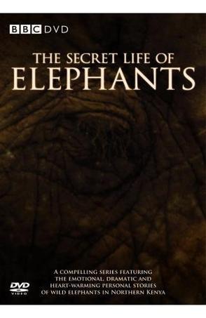BBC-大象的别样世界