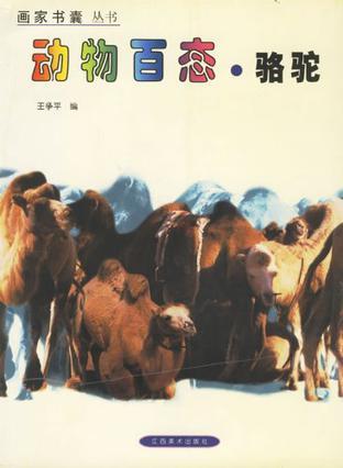 动物百态·骆驼
