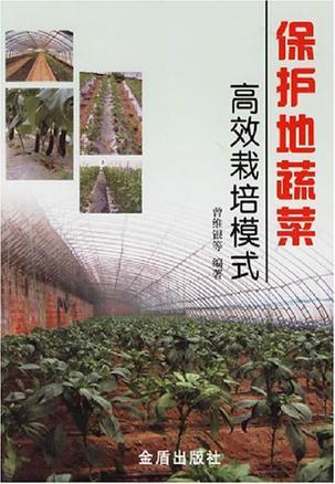 保护地蔬菜高效栽培模式