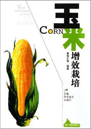 玉米增效栽培