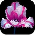 Hana (iPhone / iPad)