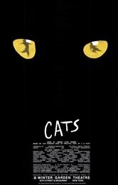 猫 的封面图片