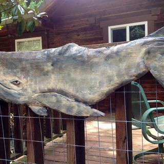 "Gray Whale 39"" chainsaw wood carving realistic sculpture home patio deck decor nautical saltwater ocean wall mount coast的图片"